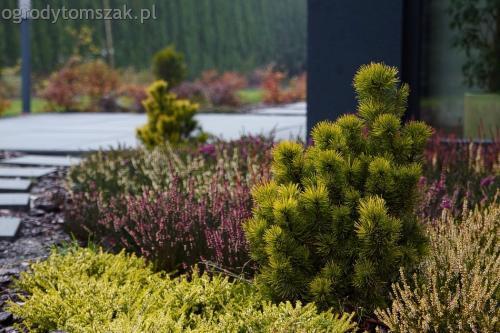 Bystra - trawnik, siatka na kreta, płyty betonowe