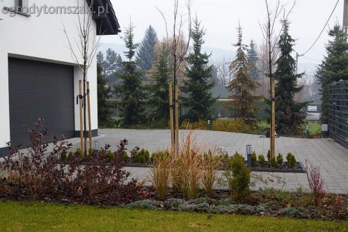 ogrodytomszak bystra trawnik obsadzanie ogrodu 15