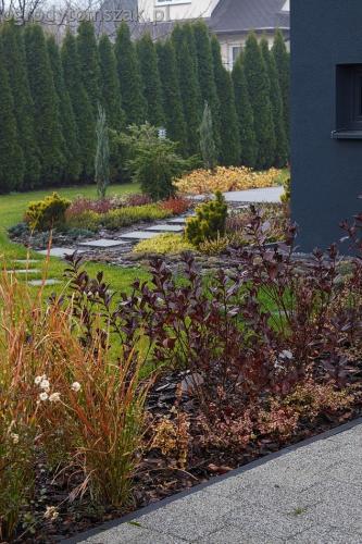 ogrodytomszak bystra trawnik obsadzanie ogrodu 16