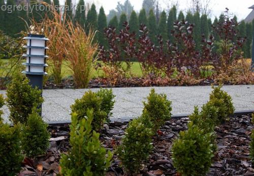 ogrodytomszak bystra trawnik obsadzanie ogrodu 17