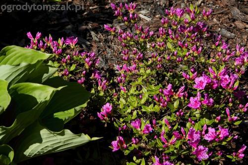 ogrodytomszak murki skalniaki obrzeza granitowe ogrodnik bielsko biala 17