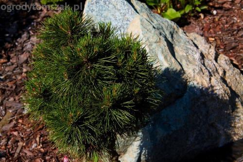 ogrodytomszak murki skalniaki obrzeza granitowe ogrodnik bielsko biala 18