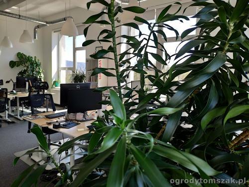ogrodytomszak zielen w biurze doniczkowe biophilic design IMG 20200422 130557