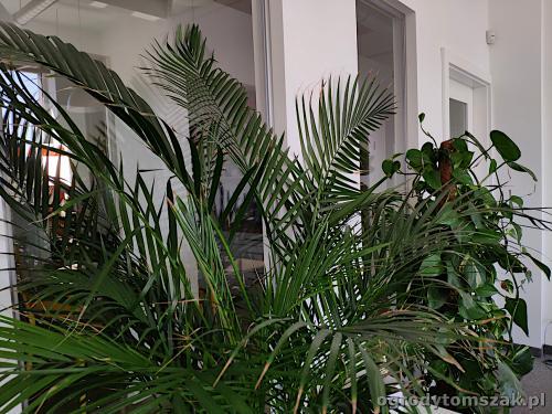ogrodytomszak zielen w biurze doniczkowe biophilic design IMG 20200422 130623