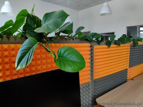 ogrodytomszak zielen w biurze doniczkowe biophilic design IMG 20200422 141821