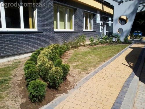 Jaworze - zieleń towarzysząca - szpital