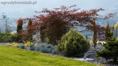 wilkowice mikuszowice lodygowice bystra ogrod murki piaskowiec trawnik schody piwniczka formowanie terenu skarpy IMG 7992