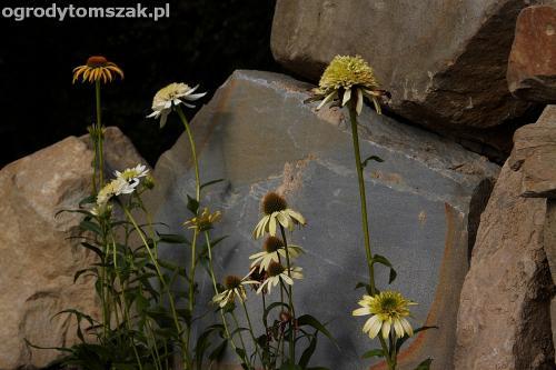 wilkowice mikuszowice lodygowice bystra ogrod murki piaskowiec trawnik schody piwniczka formowanie terenu skarpy IMG 7994