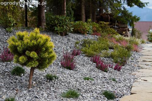 wilkowice mikuszowice lodygowice bystra ogrod murki piaskowiec trawnik schody piwniczka formowanie terenu skarpy IMG 8051