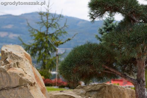 wilkowice mikuszowice lodygowice bystra ogrod murki piaskowiec trawnik schody piwniczka formowanie terenu skarpy IMG 8075