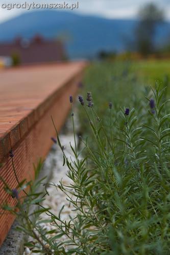 wilkowice mikuszowice lodygowice bystra ogrod murki piaskowiec trawnik schody piwniczka formowanie terenu skarpy IMG 8082