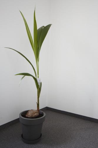 zielen w biurze biophilic design IMG 7326