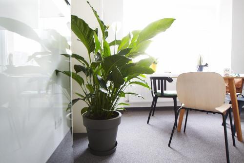 zielen w biurze biophilic design IMG 7327