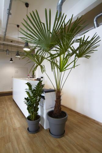 zielen w biurze biophilic design IMG 7331