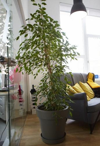 zielen w biurze biophilic design IMG 7332