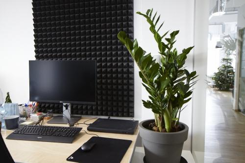 Zieleń w biurze - biophilic design - rośliny doniczkowe
