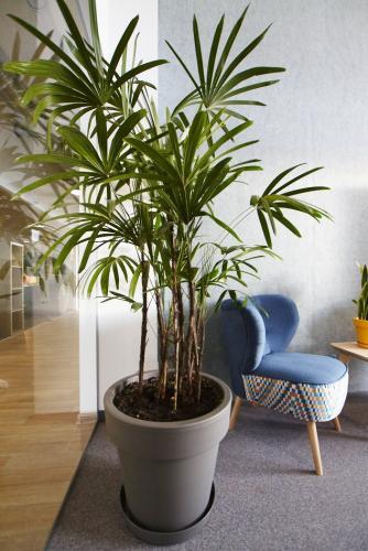 zielen w biurze biophilic design IMG 7338