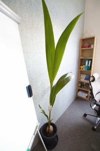 zielen w biurze biophilic design IMG 7339