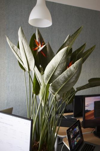 zielen w biurze biophilic design IMG 7341